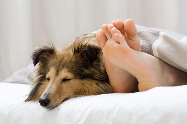 Darf Euer Hund Ins Bett 2016