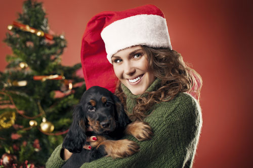 hunde sind kein weihnachtsgeschenk hunde. Black Bedroom Furniture Sets. Home Design Ideas