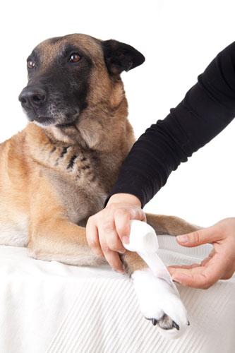 Hundekrankheiten