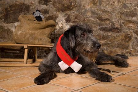 schwarzer-wolfshund