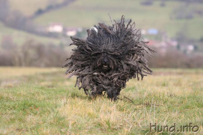 Was kommt denn da? ⋆ Hunde American Staffordshire Terrier 2014