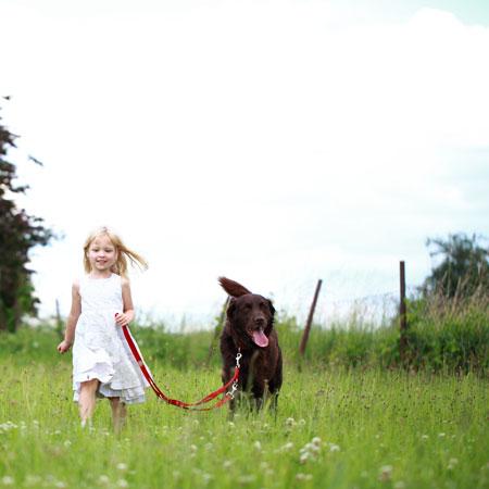 Ein Hund braucht regelmäßige Bewegung!