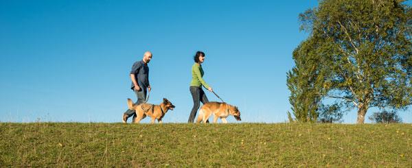 Hundefuehrschein