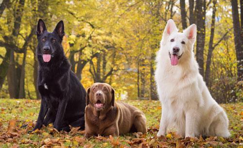 Hundehalterhaftpflichtversi