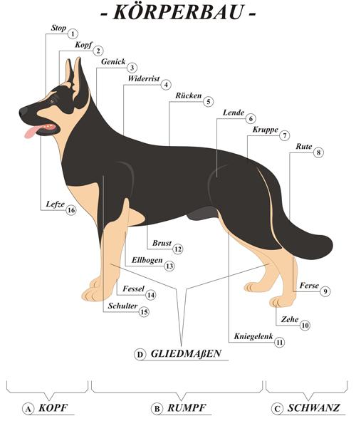 Hund Körper