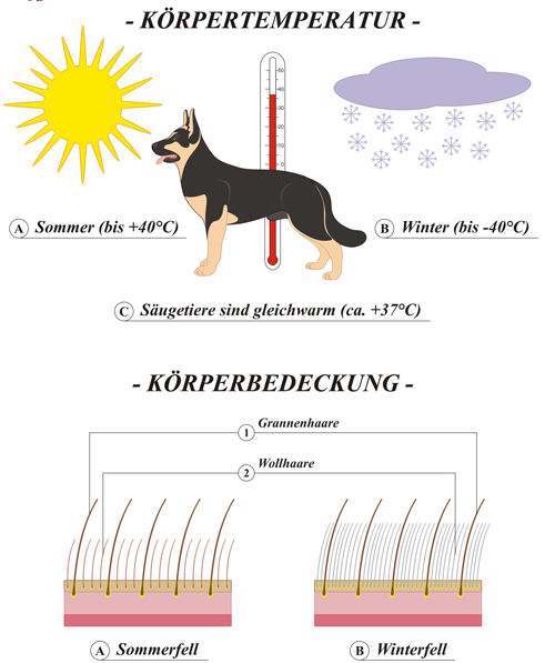 Hund-Koerpertemperatur