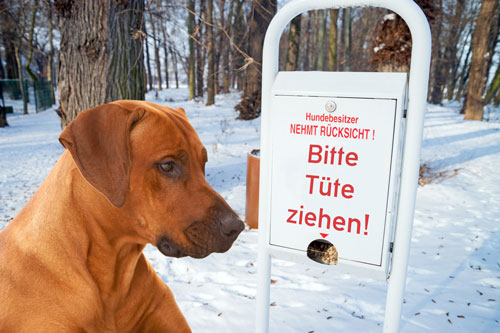 hundebesitzer-pflicht