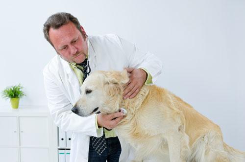 Hund-Bronchitis