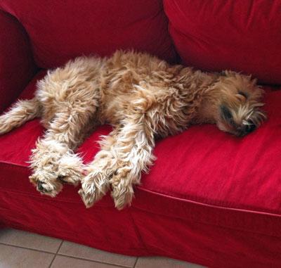 Franzi schläft heimlich auf der Couch!