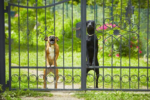 mein hund bellt beim klingeln wie kann ich ihm das abgew hnen hunde. Black Bedroom Furniture Sets. Home Design Ideas