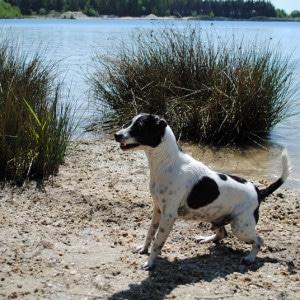 von Henry eingesendet: Das ist Speik und er liebt Wasser und Bälle. Er gehört meiner Frau Agata!