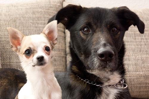Hundesteuern
