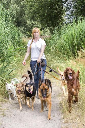 mehrere-Hunde-Umfrage