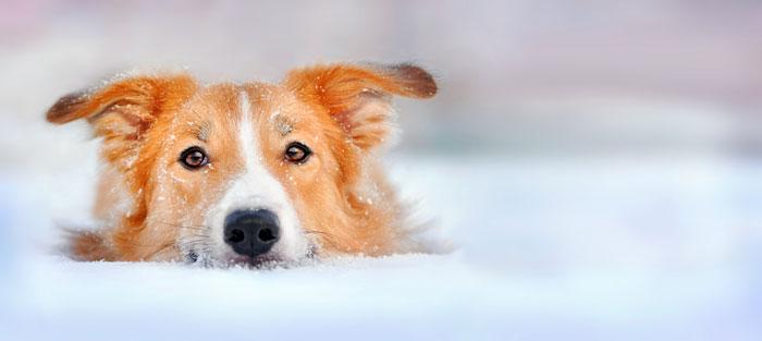 Hund-abkuehlung