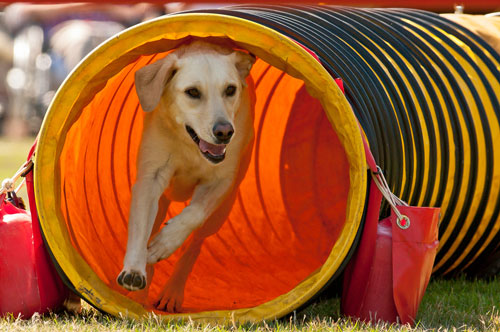 Hund-in-roehre