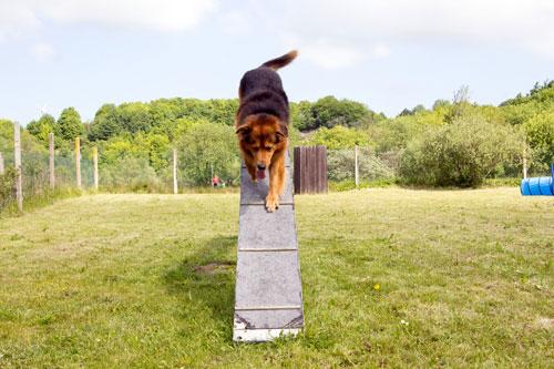 agility-rampe