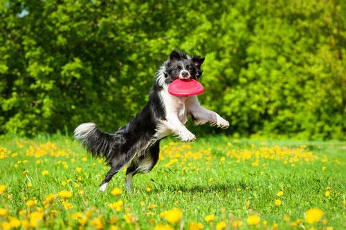 Hunde Spiele Kostenlos Spielen