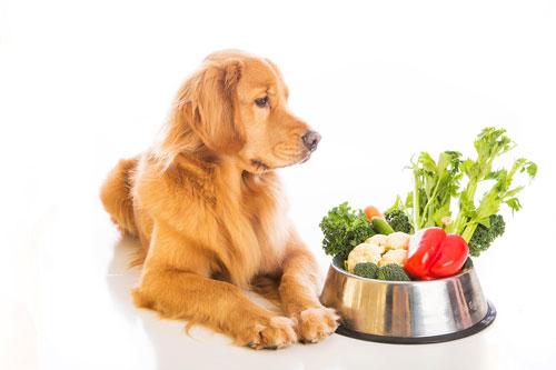 vegetarische-rezepte-hund