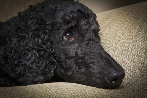 beobachte das Verhalten Deines Hundes