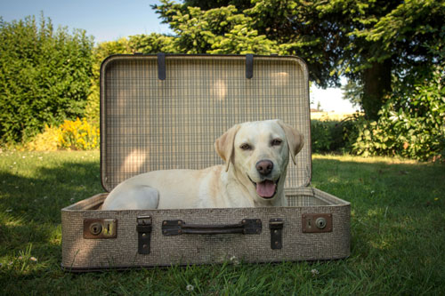 checkliste-reise-mit-hund