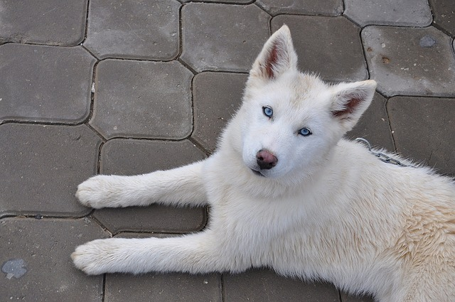Female Dog After Puppies