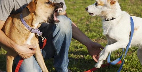 Hunde zeigen Ihre Angst - auf die Zeichen achten!