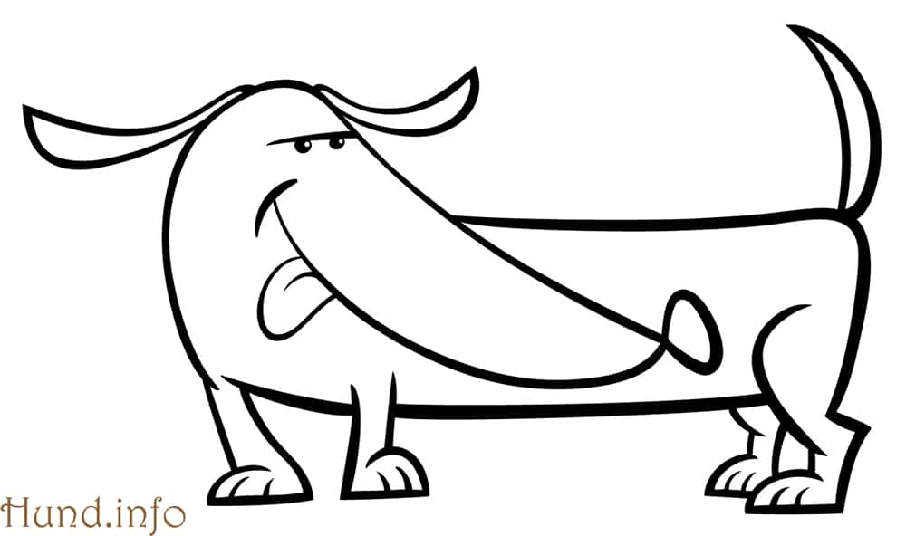 Fantastisch Anatomie Eines Hundes Bein Galerie - Menschliche ...