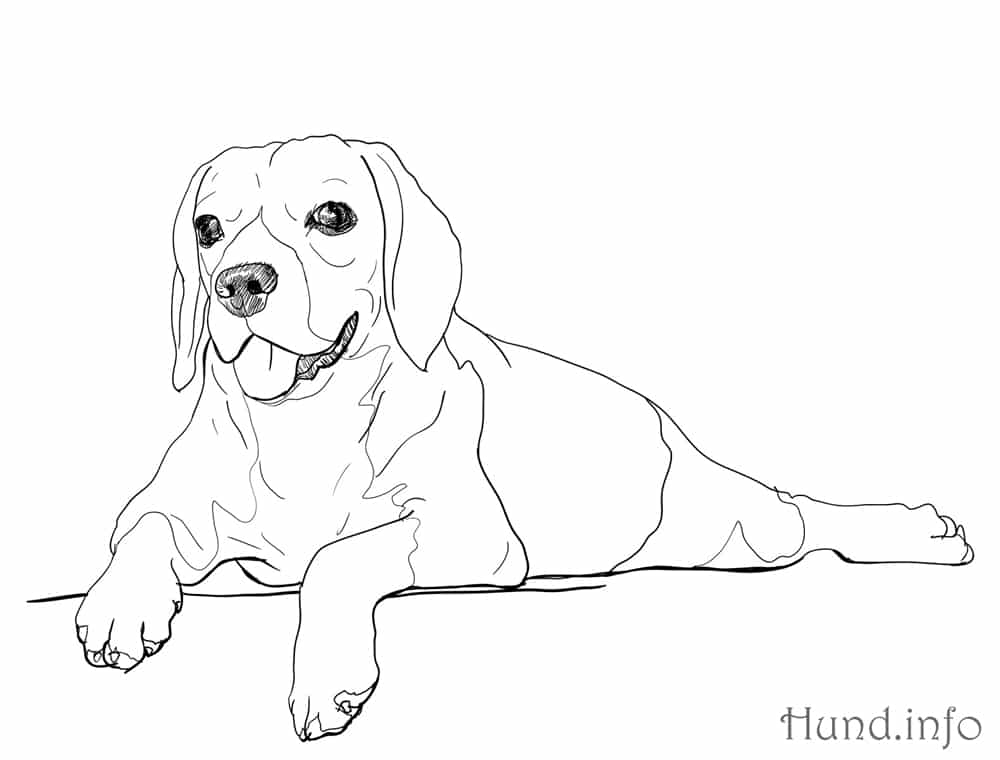 Ausmalbilder mit Hunden ⋆ Hunde