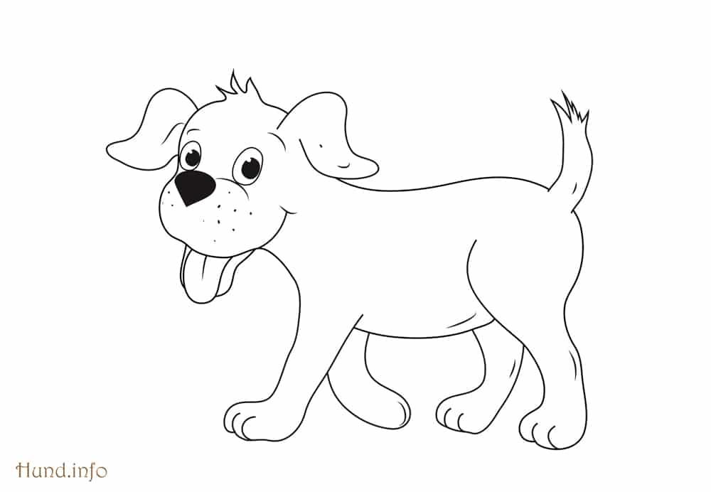 Hund Malvorlage Directtaxizwolle