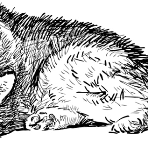 Ausmalbild-Husky-liegend