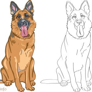Ausmalbild-Schaeferhund