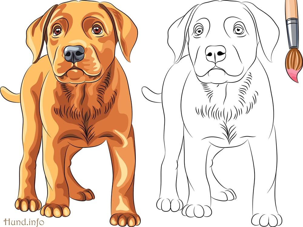 Ausmalbilder Mit Hunden Hunde
