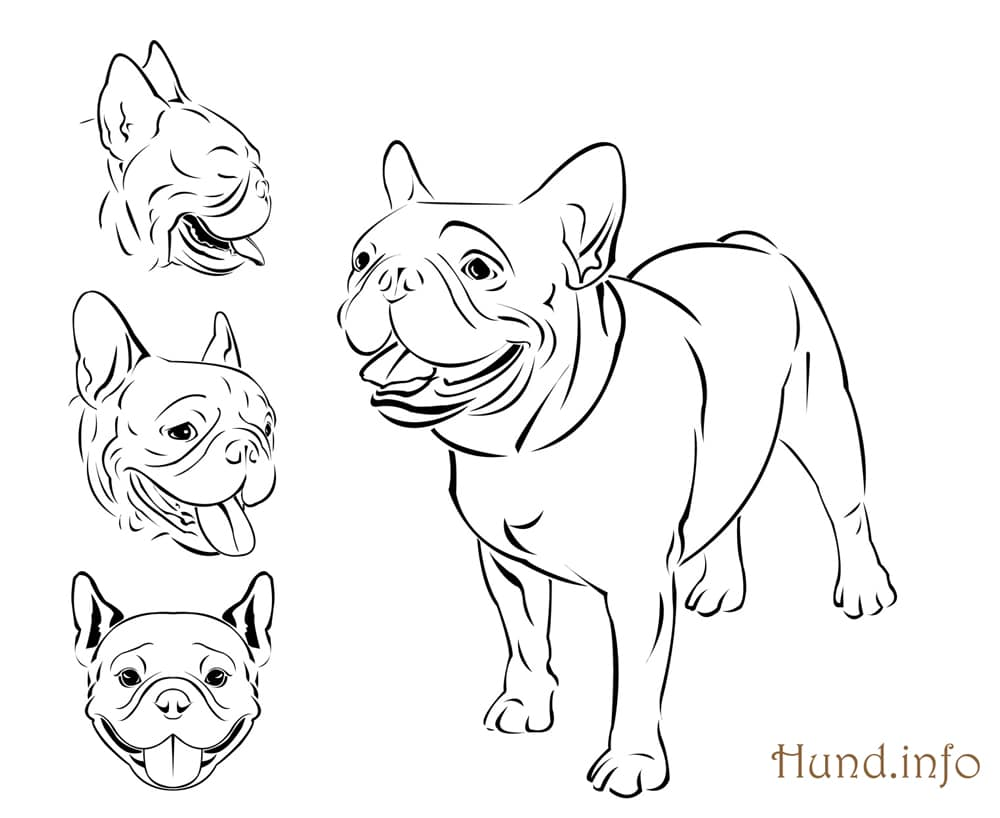 Cat Run Cycle 310959919 also Paw Patrol Tracker together with German Shepherd Puppy Coloring Page together with Barracuda Coloring Pages besides Killer Frost. on realistic dog coloring pages