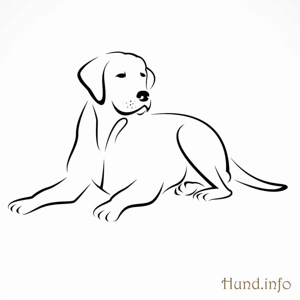 Line Art Dog Tattoo : Ausmalbilder mit hunden ⋆ hunde