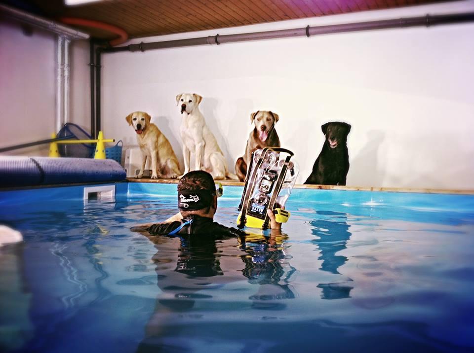Fotoshooting mit Hunden