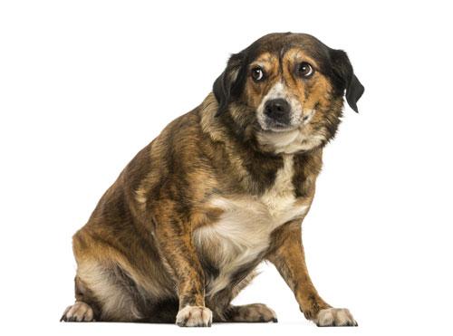 Hund-hat-Angst