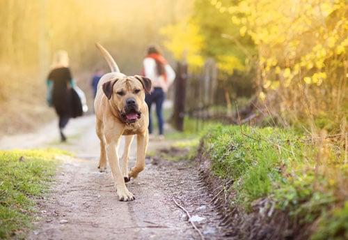hund entlaufen - was ist zu tun?