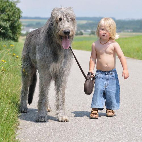 wolfshund-mit-Kind