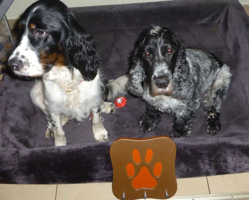 hundeschl sselbrett hundegarderobe der dog butler hunde. Black Bedroom Furniture Sets. Home Design Ideas