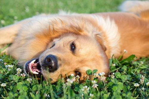 Dieser Hund ist entspannt