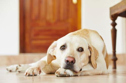 umfrage wie lange bleibt euer hund pro tag alleine zu. Black Bedroom Furniture Sets. Home Design Ideas