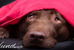 Hunde und Silvester- Tipps zum Umgang für die Nacht