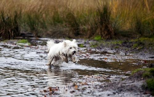 Seien Sie sich bewusst: Ein Hund braucht Auslauf und macht Dreck... JEDEN Tag!