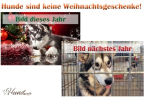 Bitte keine Hunde verschenken an Weihnachten