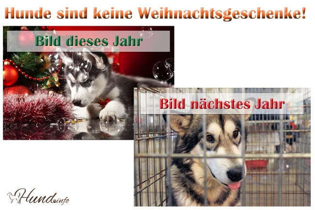 bitte keine hunde verschenken an weihnachten hunde. Black Bedroom Furniture Sets. Home Design Ideas