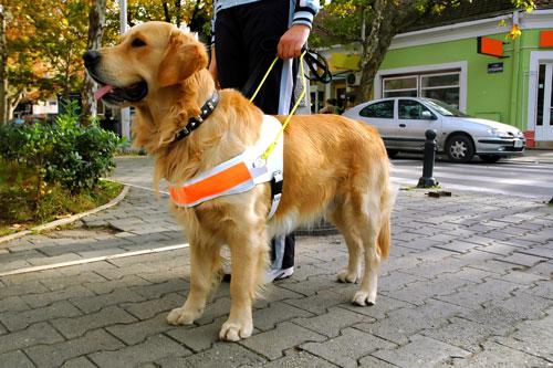 Blindenfuehrhund