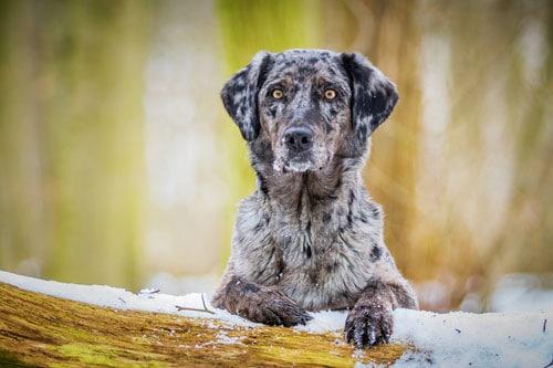 Hund-im-Winter