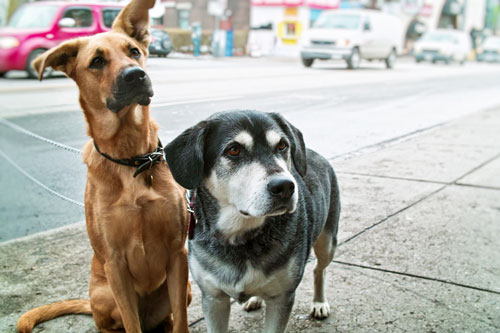 Sex in der Stadt Hund