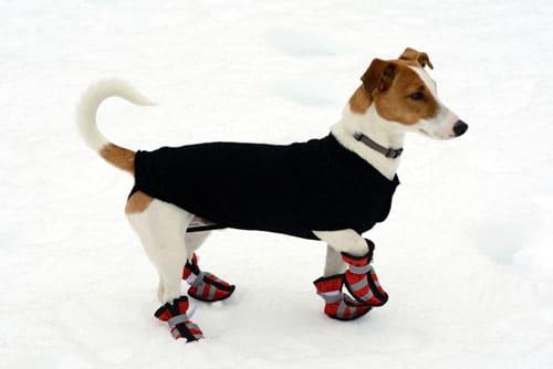 Hund-winterfest