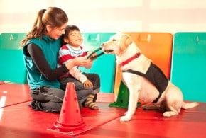 Unterstützung auf vier Pfoten – Hunde als Therapeuten